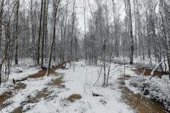Corrientes del invierno del bosque ice de un lago nevado hermoso y del bosque Imagen de archivo