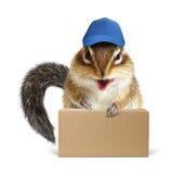 Corriere divertente dello scoiattolo con la scatola ed il berretto da baseball Immagini Stock Libere da Diritti