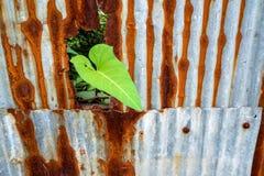 Corriola e oxidação de aço galvanizada e corrosão da cerca imagem de stock royalty free