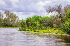 Corroboree Billabong in Northern Territory, Australia is a paradise for birds, fish and other wildlife Stock Photography