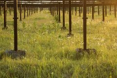 放弃,增长的菜的corroid都市工业温室 图库摄影