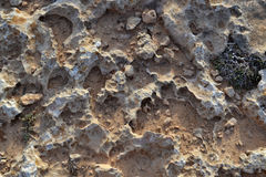 Corrosive stones with clay and coastal plants Royalty Free Stock Photography