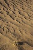 Corrugação de Sandy Fotografia de Stock