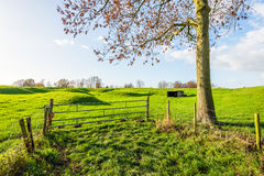 Corrugated landscape at the edge of the Dutch fortress town Woud Stock Image