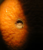 Corrugated orange rind detail royalty free stock photography