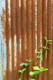 Corrugated rusty metal wall Stock Images
