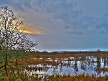 Cors Carnon Nature Reserve - The Tregaron Bog! Royalty Free Stock Image