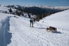 Corsa con gli sci che attraversa il paese nelle alpi con due husky Fotografie Stock