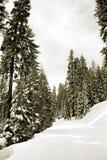 Corsa con gli sci del paese trasversale Immagini Stock Libere da Diritti