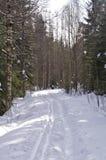 Corsa con gli sci del paese trasversale Fotografia Stock
