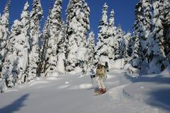 Corsa con gli sci dell'albero Immagine Stock