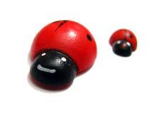 Corsa dei Ladybugs Immagini Stock Libere da Diritti