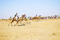 Corsa del cammello in Jaisalmer, Ragiastan immagini stock
