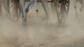 Corsa del carretto di Bullock in cittadina Nagaon vicino a Alibaug in maharashtra India stock footage