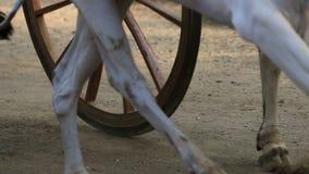 Corsa del carretto di Bullock in cittadina Nagaon vicino a Alibaug in maharashtra India archivi video