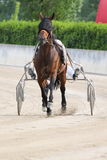 Corsa dell'italiano del cavallo Fotografia Stock Libera da Diritti