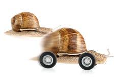 Corsa della lumaca sulle rotelle Immagini Stock Libere da Diritti