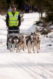 Corsa della slitta di cane Fotografia Stock