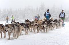 Corsa della slitta tirata da cani Fotografie Stock Libere da Diritti