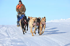 Corsa della slitta tirata da cani Fotografie Stock