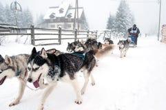 Corsa della slitta tirata da cani con i husky Fotografie Stock Libere da Diritti