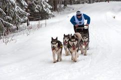 Corsa della slitta tirata da cani del husky Fotografia Stock
