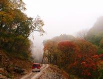 Corsa di automobile nel nebbioso in foresta Fotografia Stock