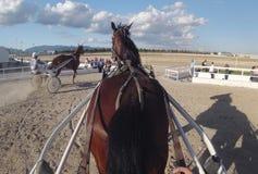Corsa di cablaggio del cavallo 052 Immagini Stock