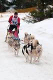 Corsa di cane della slitta, Donovaly, Slovacchia Immagine Stock Libera da Diritti
