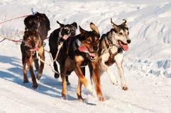 Corsa di cane di slitta Fotografie Stock Libere da Diritti
