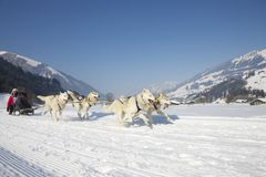 Corsa di cane di slitta Lenk/Svizzera 2012 Immagine Stock