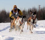 Corsa di cane di slitta nordamericana limitata Immagine Stock Libera da Diritti