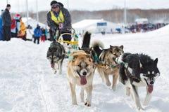 Corsa di cani Beringia della slitta di Kamchatka Fotografie Stock Libere da Diritti