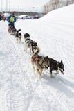 Corsa di cani Beringia della slitta di Kamchatka Fotografia Stock