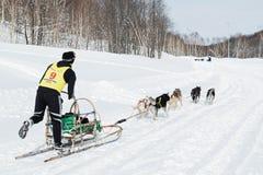 Corsa di cani Beringia della slitta di Kamchatka Fotografie Stock