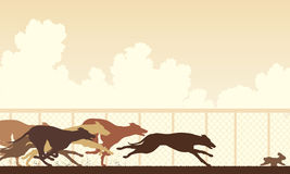 Corsa di cani del levriero Fotografia Stock Libera da Diritti