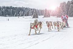 Corsa di cani della slitta su neve nell'inverno Immagine Stock