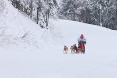 Corsa di cani, driver e cani della slitta durante la concorrenza Immagine Stock