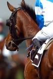 Corsa di cavalli 01 Immagini Stock