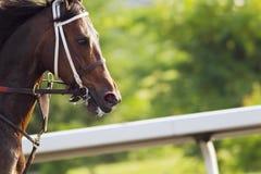 Corsa di cavalli Immagini Stock Libere da Diritti