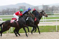 Corsa di cavalli. Immagini Stock Libere da Diritti
