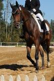 Corsa di cavalli 001 Immagine Stock