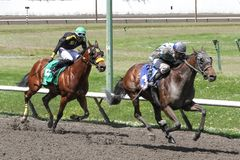 Corsa di cavalli al PNE immagine stock libera da diritti