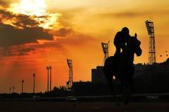 Corsa di cavalli al tramonto Fotografie Stock Libere da Diritti