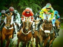 Corsa di cavalli all'ippodromo di Worcester Fotografia Stock