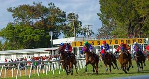 Corsa di cavalli in Barbados a Garrison Savannah fotografie stock libere da diritti