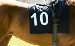 Corsa di cavalli, cavallo marrone con il numero 10 Immagine Stock