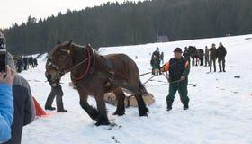 Corsa di cavalli da tiro Fotografia Stock