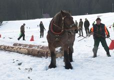 Corsa di cavalli da tiro Immagine Stock