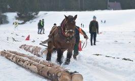 Corsa di cavalli da tiro Fotografie Stock